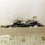 Stachybotrysbathroom