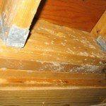 woodbeamsbasement