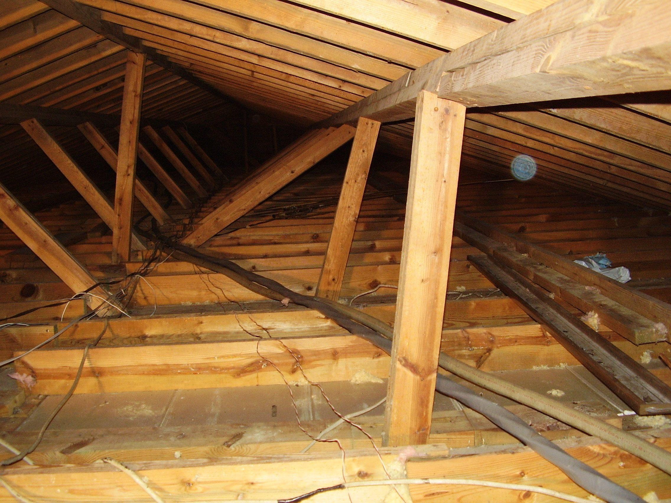 mold attic