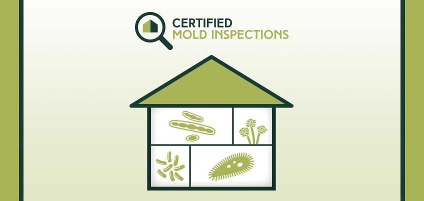 When is it Time for Mold Testing?