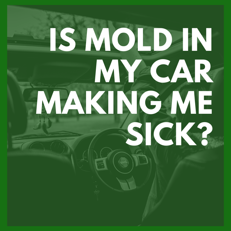mold in car